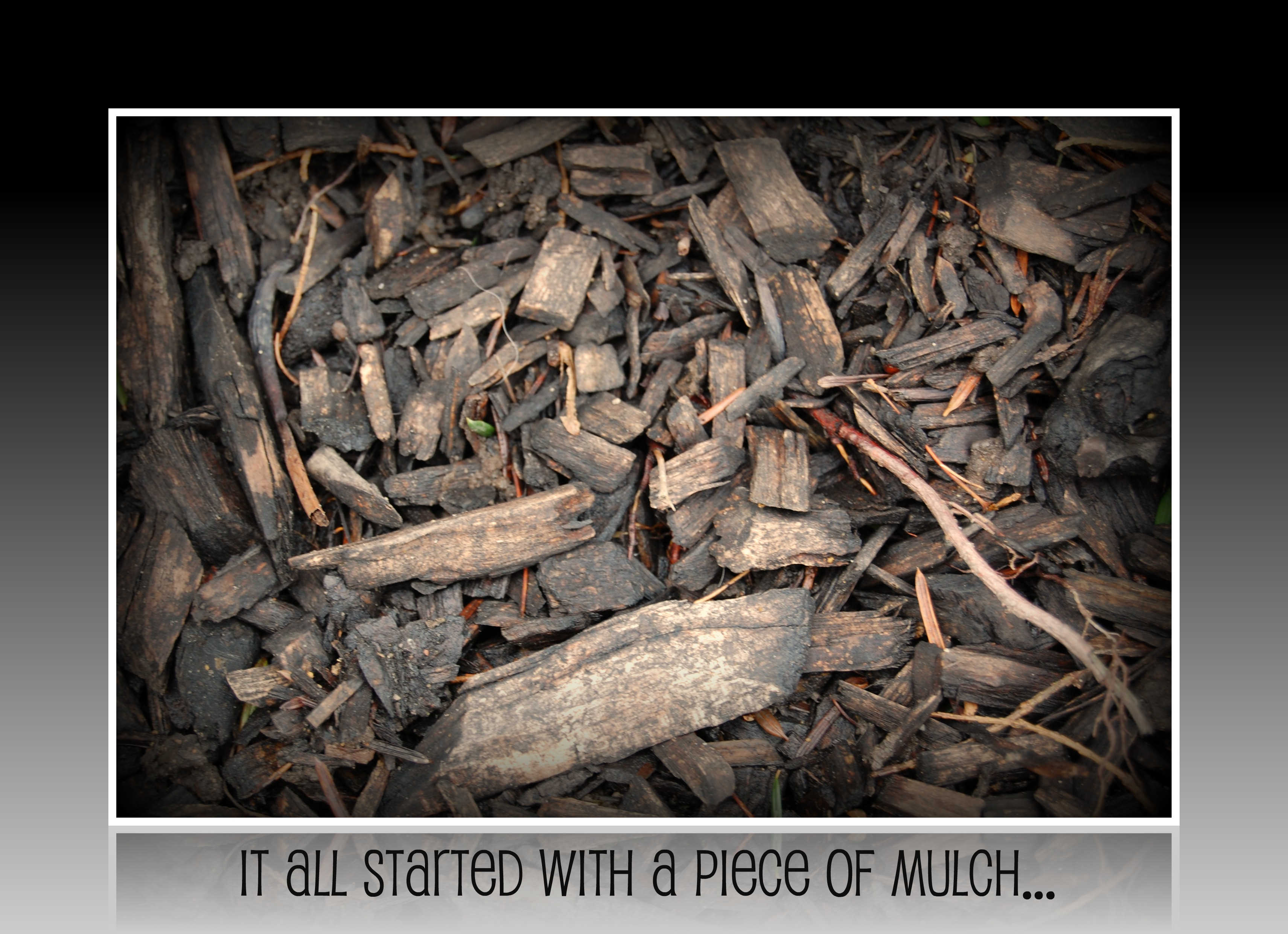 how to stop dog from eating mulch