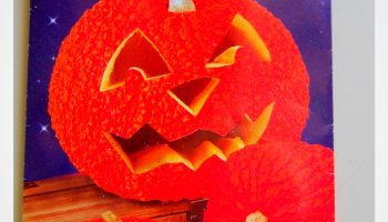 red warty thing - Growing Halloween Pumpkins
