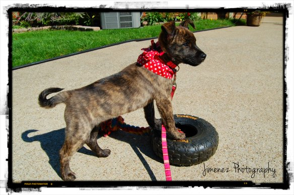 BELLA ON TIRE 9-9-12
