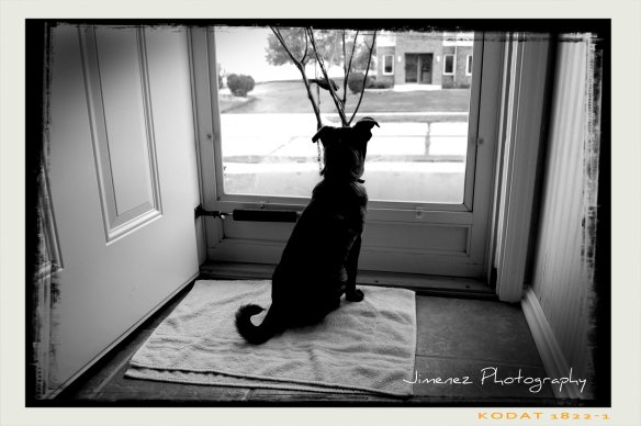 I love this photograph of Bella sitting by the front door!