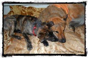 Bella and Nikita Snuggling 12-11-12