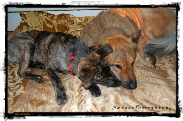 Bella and Nikita Snuggling 12-11-12