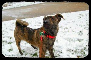Bella In The Snow 12-21-12