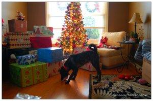 Bella Enjoying Her 1st Christmas