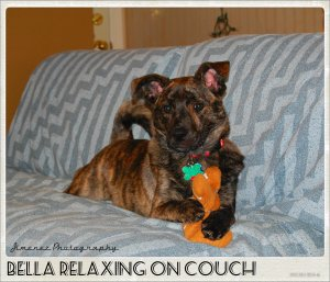 BELLA RELAXING ON COUCH
