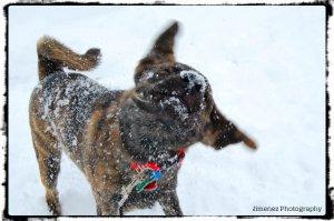 BELLA SNOW5 12-30-12