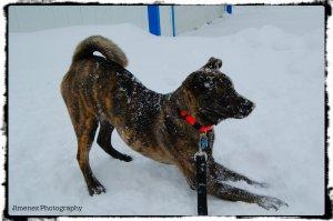 BELLA SNOW6 12-30-12