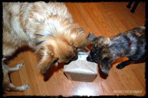 NIKITA AND BELLA HELP OPEN PACKAGE