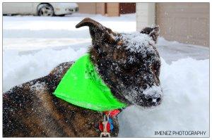 BELLA ENJOYING THE SNOW