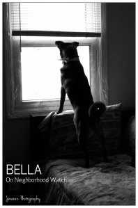 BELLA ON WATCH