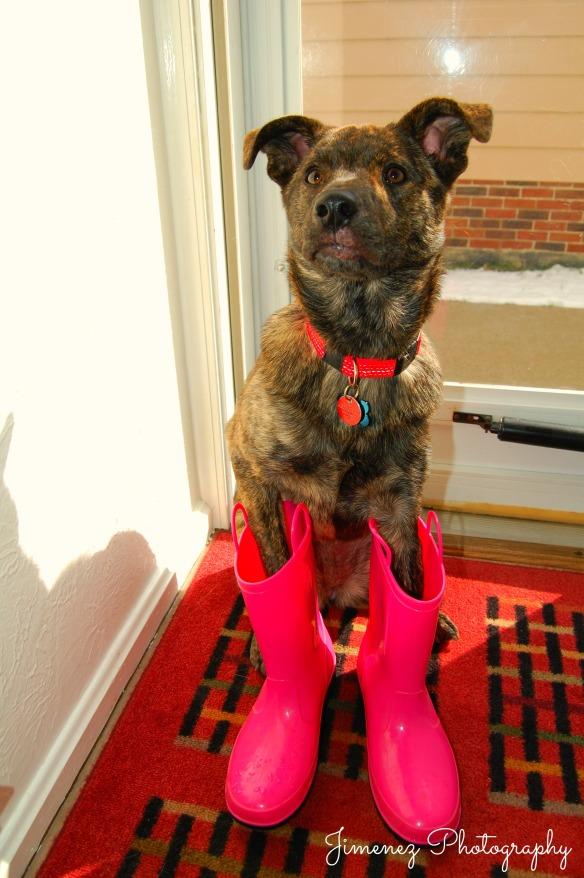 Bella Footwear Fashionista