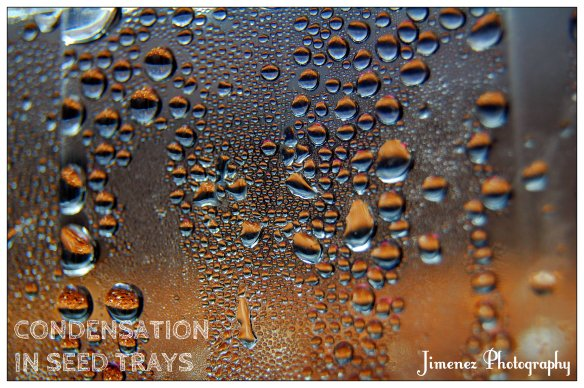 CONDENSATION IN SEED TRAYS