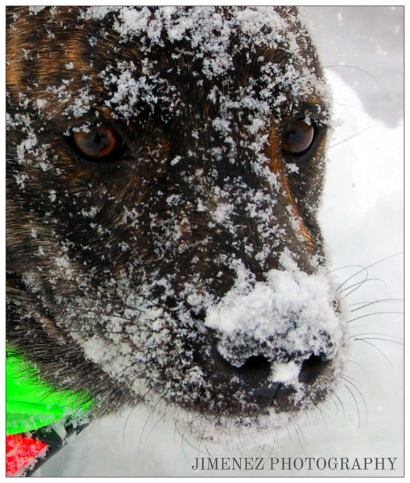SNOWY NOSED BELLA