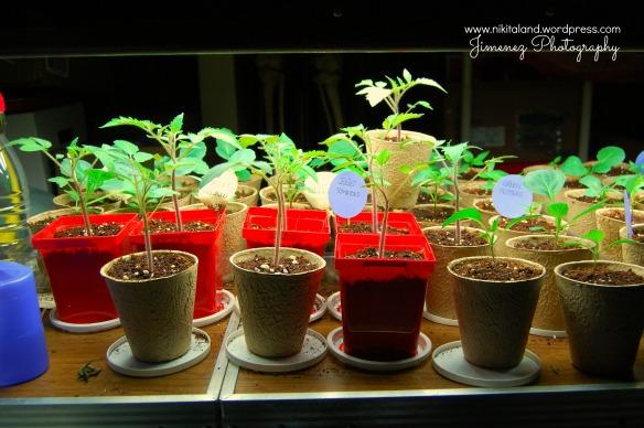 4-12-13 Plants