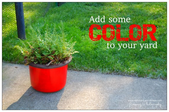 ADD COLOR TO YOUR YARD