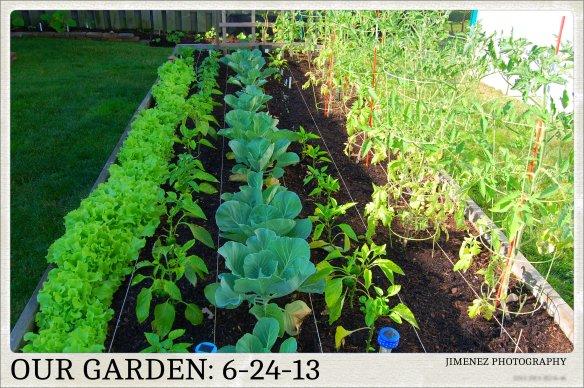 Garden Update: 6-24-13