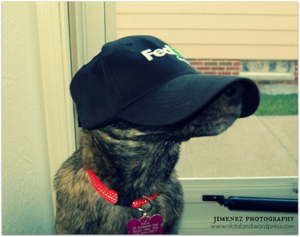 BELLA IN FEDEX HAT
