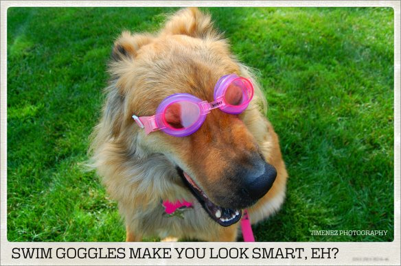 SWIM GOGGLES MAKE YOU LOOK SMART