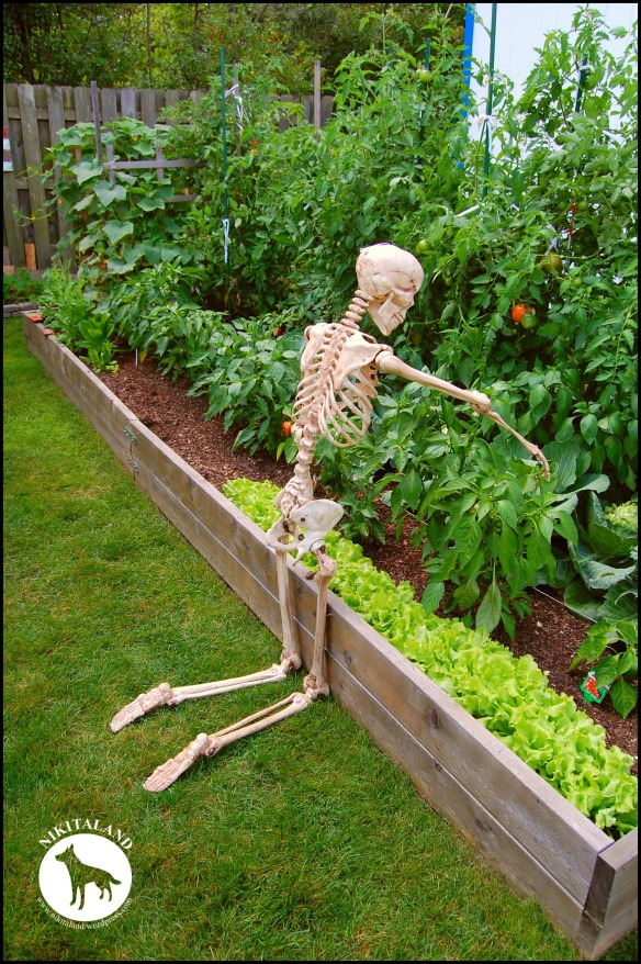 BeFunky_SKELETON PICKING PEPPERS a