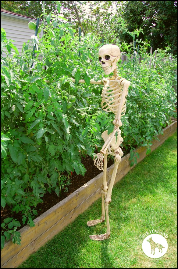 BeFunky_SKELETON PICKING TOMATOES a