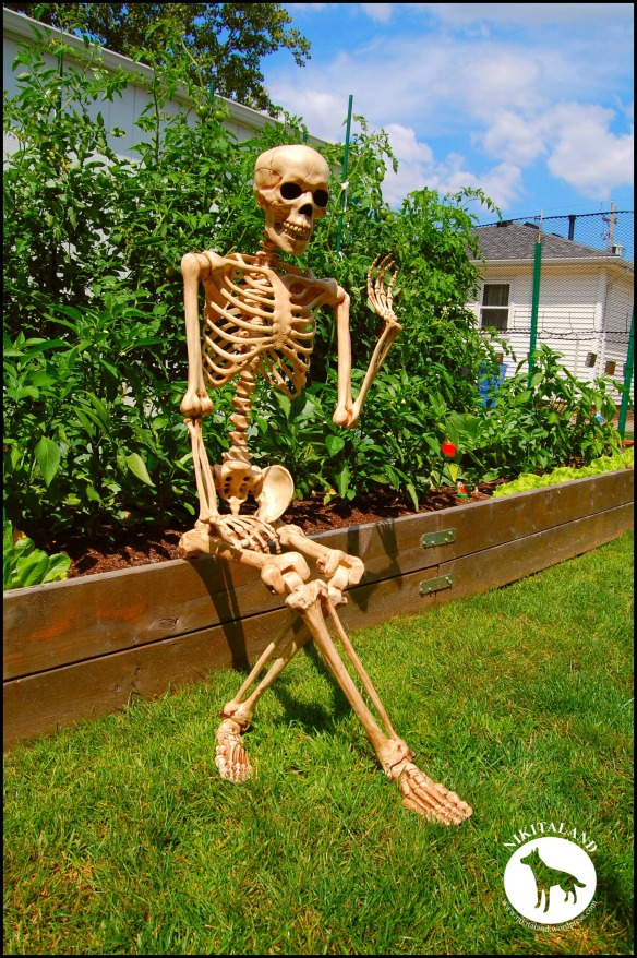 BeFunky_SKELETON SITTING NEXT TO GARDEN a
