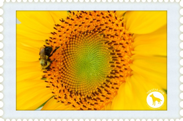 BeFunky_SUNFLOWER AND BEE2