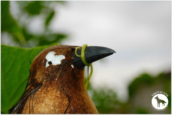 BIRD IN GARDEN 8-19-13