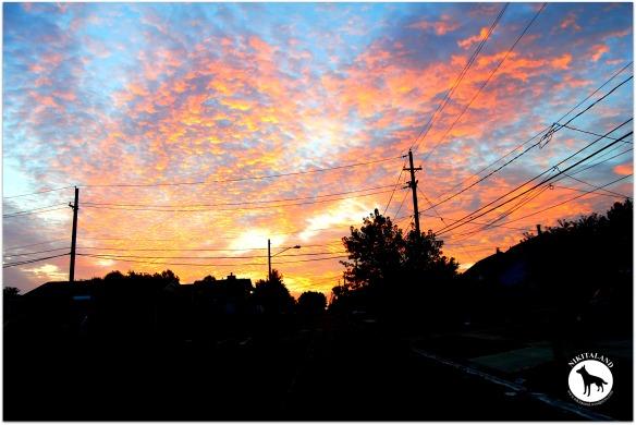 MORNING SKY 8-10-13