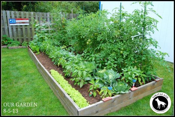 Garden Update: 8-5-13