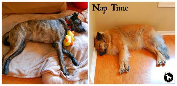 NAP TIME2