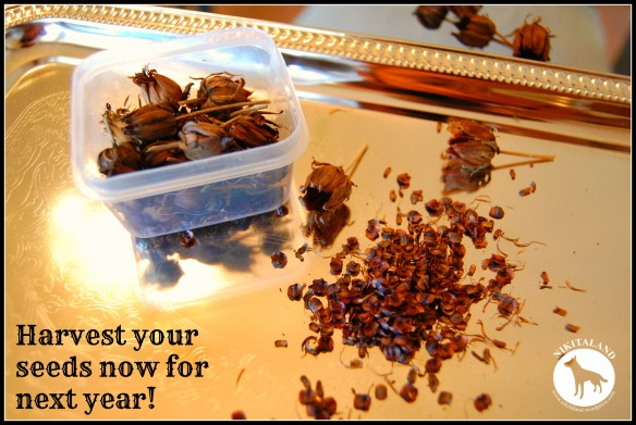 REMOVE SEEDS FROM DRIED FLOWERS