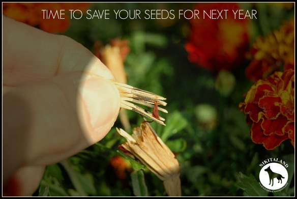 TIME TO SAVE YOUR SEEDS