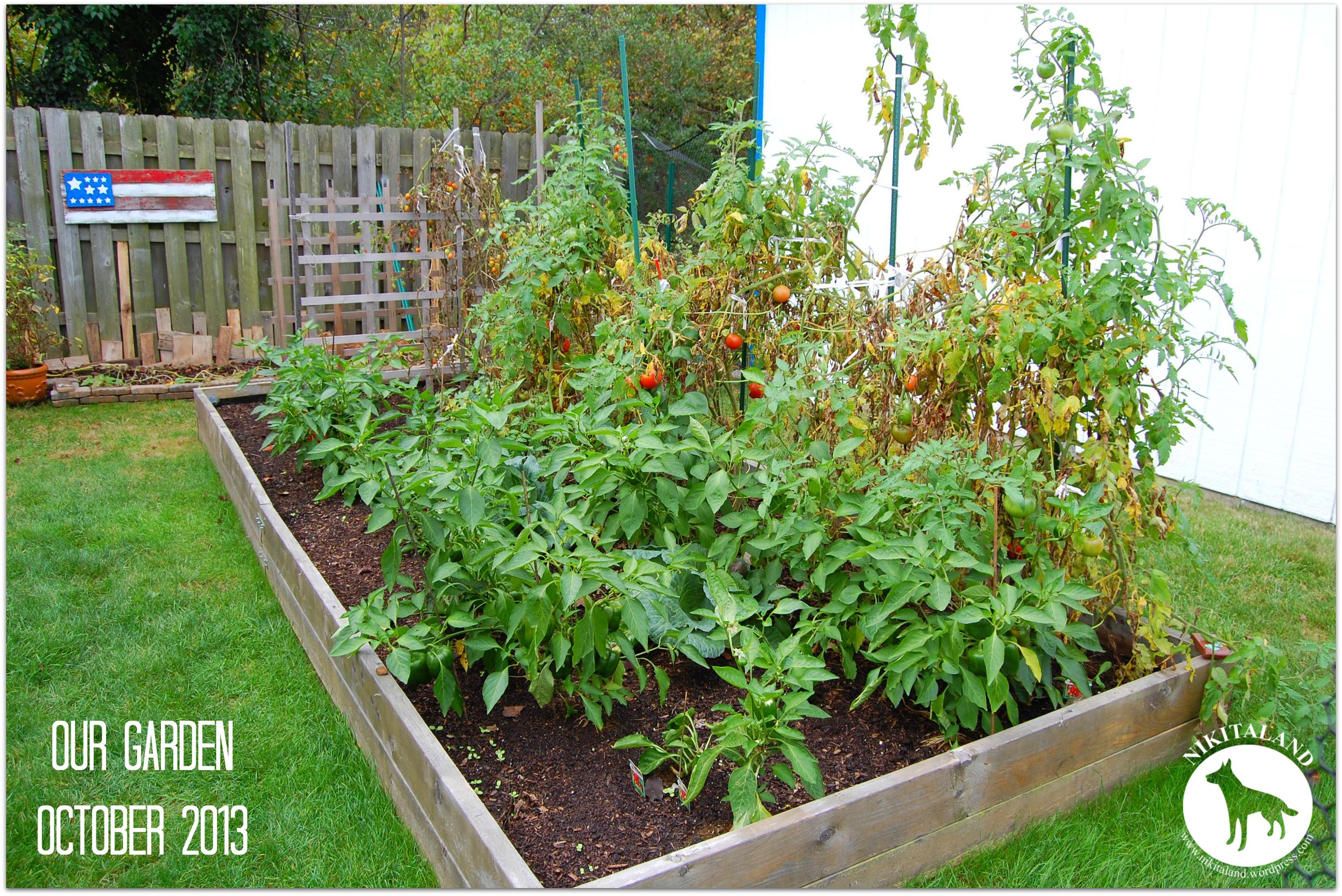 Growing juliet tomatoes nikitaland - Planting pepper garden ...