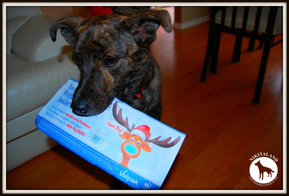 BELLA AND JUNK MAIL