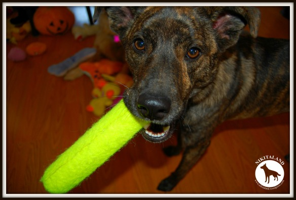 BELLA AND TENNIS STICK 11-15-13