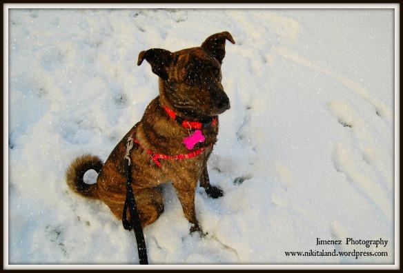 BELLA IN THE SNOW 11-12-13