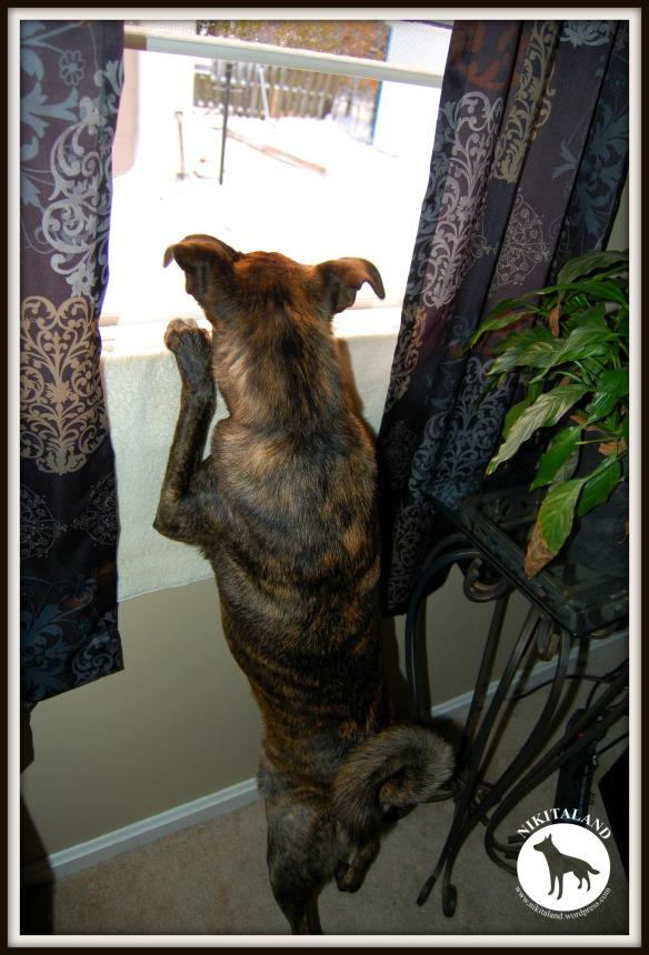 BELLA PEEKING OUT WINDOW