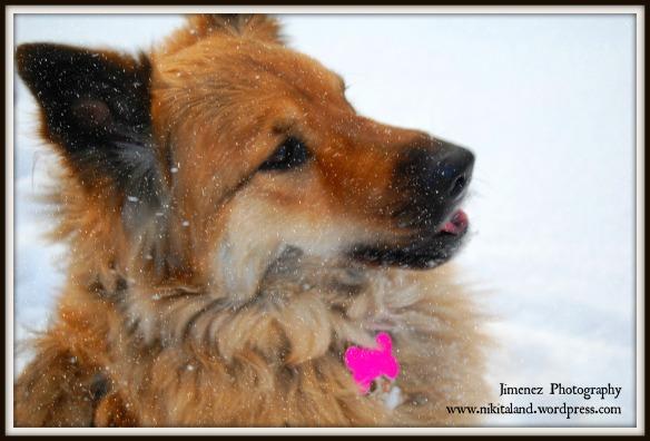 NIKITA CATCHING SNOWFLAKES 11-12-13
