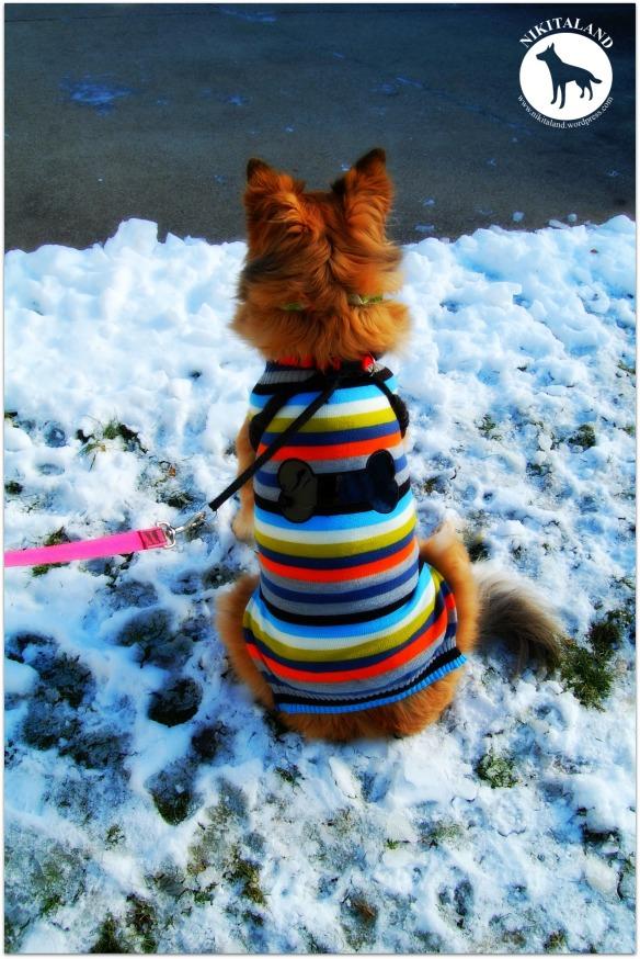 NIKITA SITTING IN SNOW WITH SWEATER