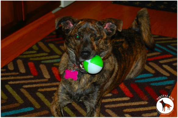 BELLA WITH BALL