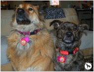Wag Aware Dog Tags