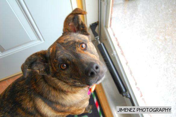 BELLA LOOKING OUT SNOWY DOOR