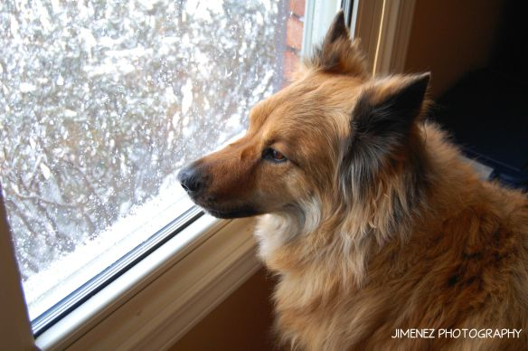 NIKITA LOOKING OUT SNOWY WINDOW