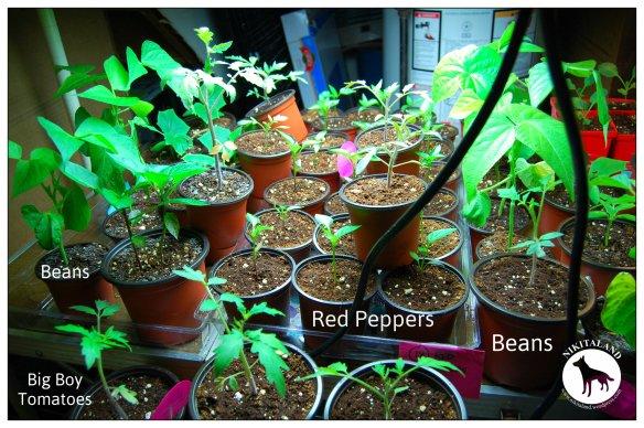 4-27-14 Plants