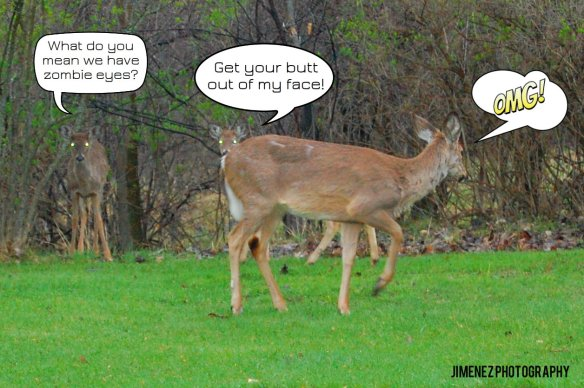 DEER CAPTIONS
