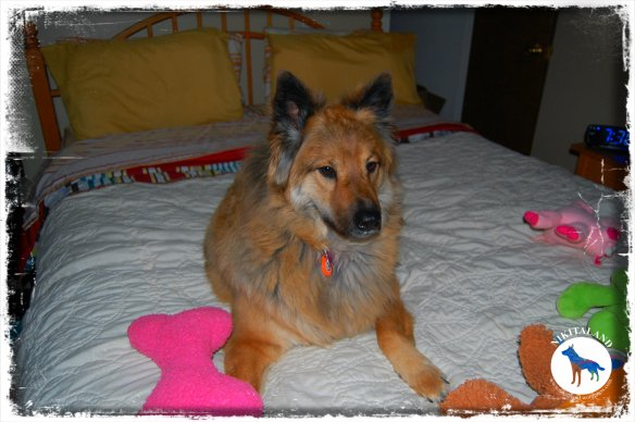 NIKITA ON BED WITH TOYS
