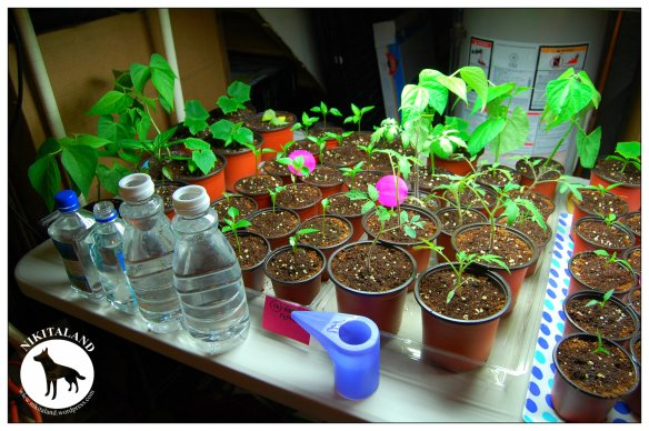 PLANTS2 4-27-14