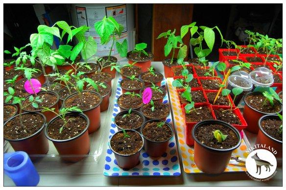 PLANTS3 4-27-14