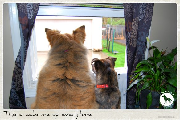 NIKITA AND BELLA LOOKING OUT WINDOW