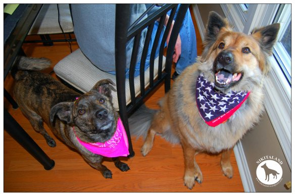 PATRIOTIC BELLA AND NIKITA